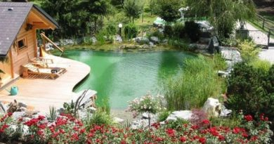 natural swimming pool ideas feature